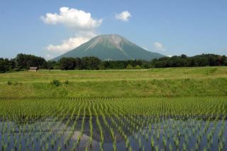 大山と水田